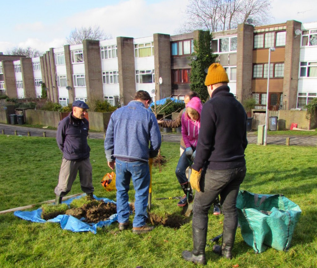 Open Orchard Project tree planting